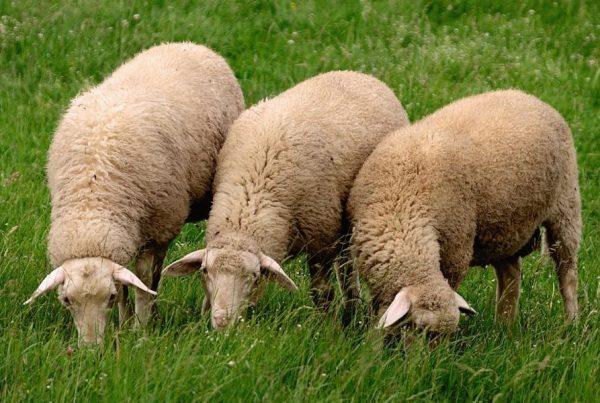 Trávne zmesi pre poľnohospodárske využitie