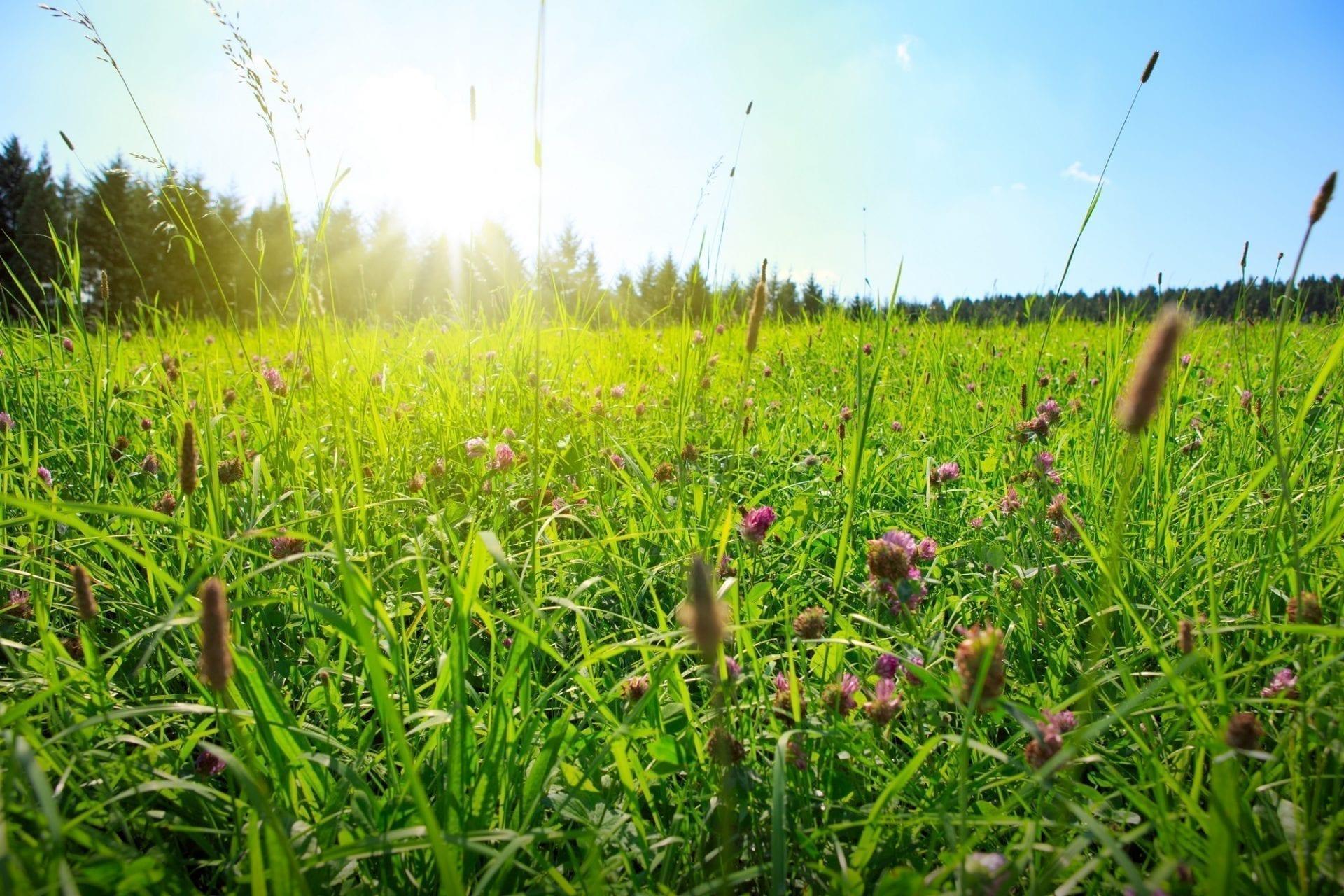 Ako vybrať trávnu zmes na poľnohospodárske účely?