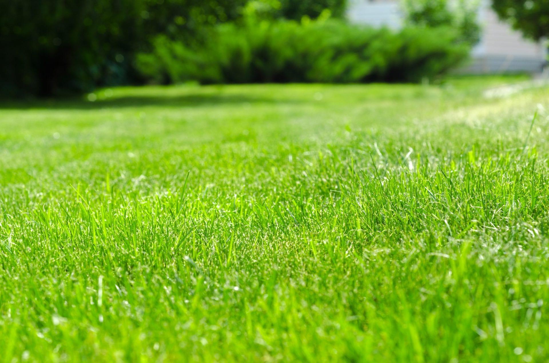 Zakladáme si trávnik výsevom