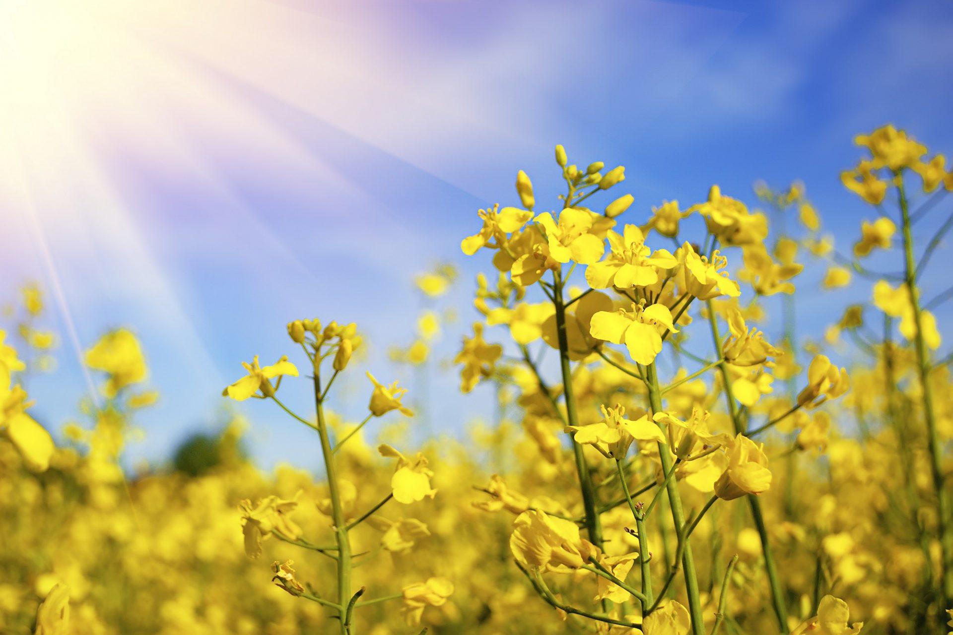 Oplatí sa zaradiť medziplodiny a zelené hnojenie?